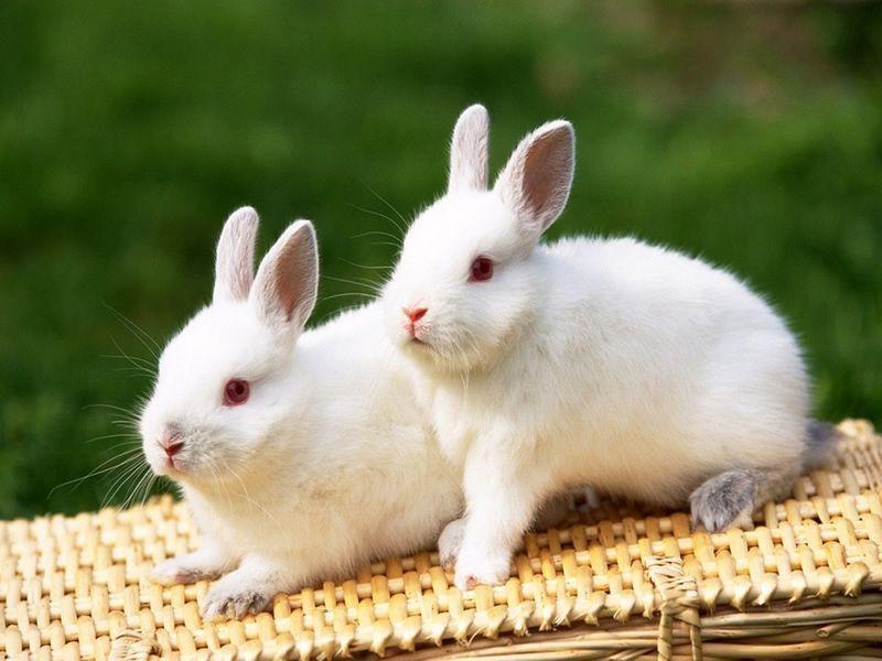 p;小白兔确实挺可爱的